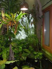 Terraristiktag: 4m² Afrika zwischen Wohnzimmer und Wintergarten